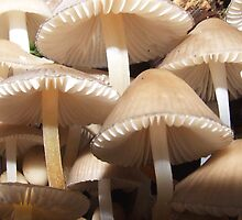 Perky Parasols by Paul Gibbons