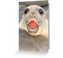 A female Elephant seal Mirounga angustirostris Greeting Card