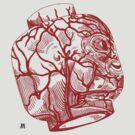 Veins of head (red) by burntwoodstudio