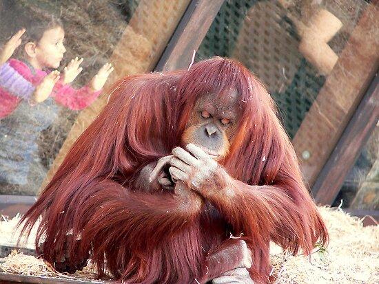 OrangUtan Coiffure by Tom Newman
