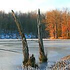 Winter Tones by Geno Rugh