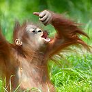 cute baby orangutan by Enjoylife