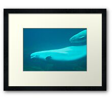 Whale Mother and Calf Framed Print