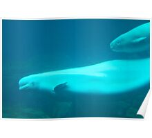 Whale Mother and Calf Poster