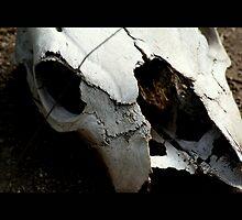 skull 01 by Kittin