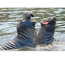 Confrontation / Conflict. Elephant Seals Reserve, San Simeon, CA Photographic Print