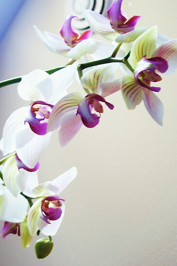 orchid by Katie Hoisington