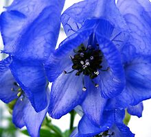 monkshood by soulsease