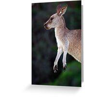 Kangaroo at Pebbly Beach Greeting Card