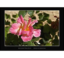 Brushed Pink Rose - Cool Stuff Photographic Print