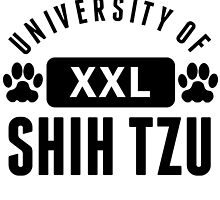 University Of Shih Tzu by kwg2200