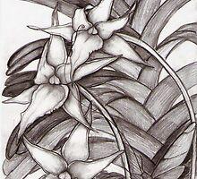 Angraecum Studies #1 by Sue Abonyi