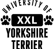 University Of Yorkshire Terrier by kwg2200