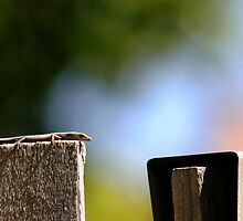 Front Yard Fence Lizard by Dors