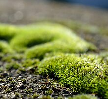 Morning Moss  by IOANNA PAPANIKOLAOU