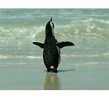 Penguin on Beach Photographic Print