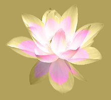 7 DAY'S OF SUMMER-YOGA ZEN RANGE- GOLD LOTUS by 7 days of Summer