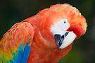Scarlet Macaw Parrot by Eyal Nahmias