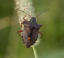 Forest Bug by Robert Carr