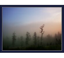 Morning mist in the forest Photographic Print