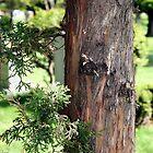Tree Bark by Summer369