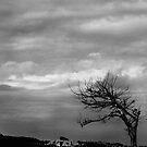 a grey world by Rebecka Wärja