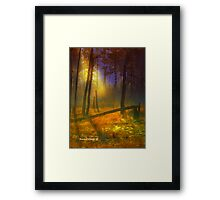 Evening Mist in the Woods Framed Print