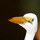 Egret by Sam Hanie