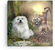 Snowdrop the Maltese at The Wishing Well Metal Print