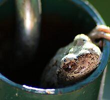 Peekaboo Peeper by velveteagle