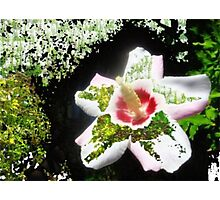 Garden Grace Photographic Print