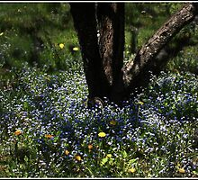 Dance of Bluets and Light by Wayne King