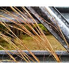 Grasses leaning with metal gate by Nadia Korths