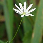 Single White Flower by Deborah  Bowness