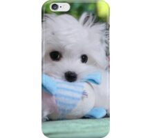 Hermes the Maltese - An Introduction iPhone Case/Skin
