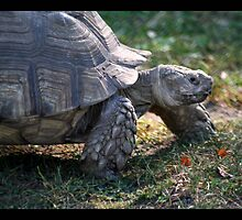 turtle 02 by Kittin