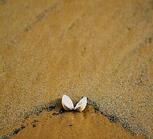 Beach Shell by Rebecca Smith