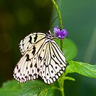 Rice Paper Butterfly on Purple Flower by Mark Snelson