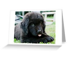 Zoe the Terre-Neuve Greeting Card