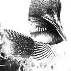 Common Loon Illustration by William Martin
