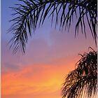 Sarasota Sunset by Christina Sauber