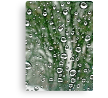 Drops and Trees © Canvas Print