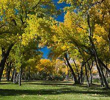 Golden Trees by bluerabbit