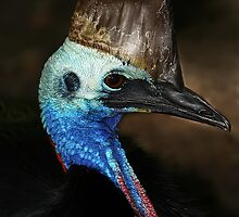 Cassowary by Lesley Smitheringale