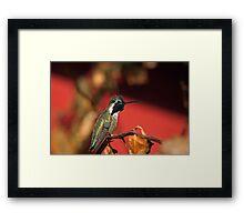 Perched Hummingbird Framed Print