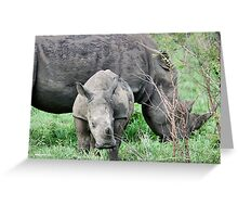 UP CLOSE WITH RHINO BABY AND MOTHER - White Rhinoceros - Ceratotherium sumum  Greeting Card