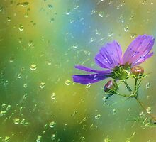 Rainy Day Cosmos by zeebuzz