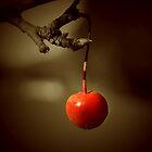 cherry by JennySmith
