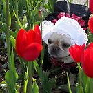 Lily in the Tulips by Maria Dryfhout