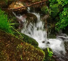 Tumbling Mountain Stream by Debra Fedchin